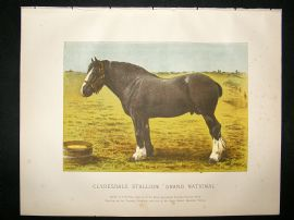 Miles Practical Farriery C1875 Antique Print. Clydesdale Stallion 'Grand National'